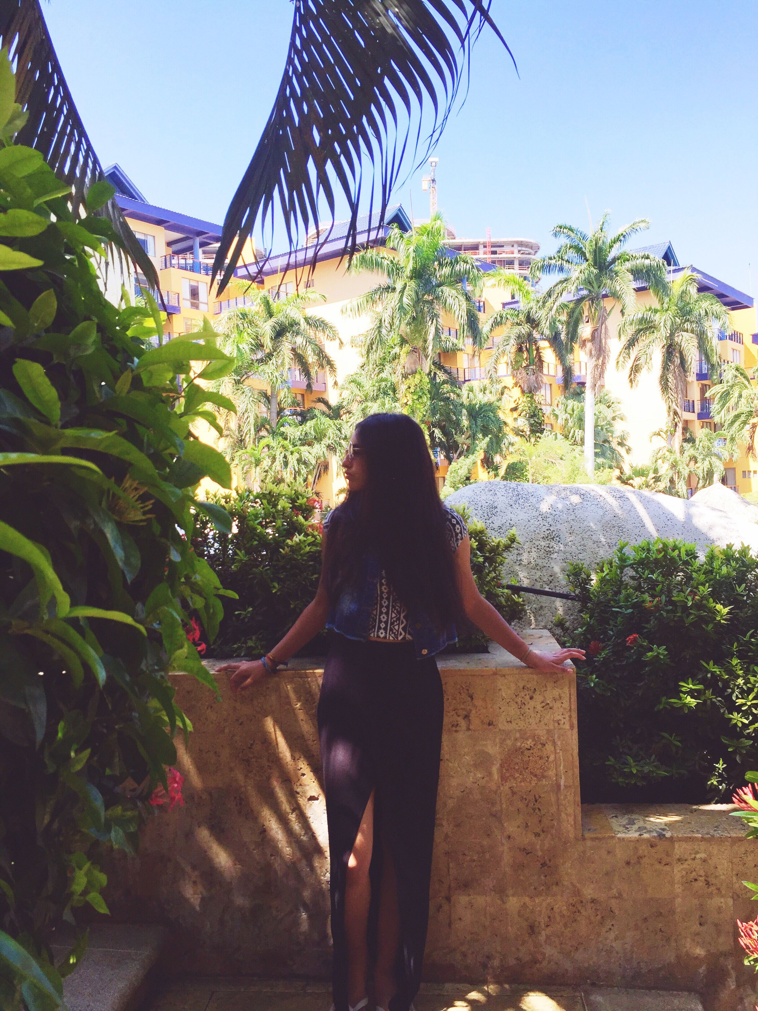 tree, lifestyles, clear sky, standing, leisure activity, full length, built structure, rear view, person, sunlight, building exterior, architecture, palm tree, casual clothing, young adult, three quarter length, young women, growth