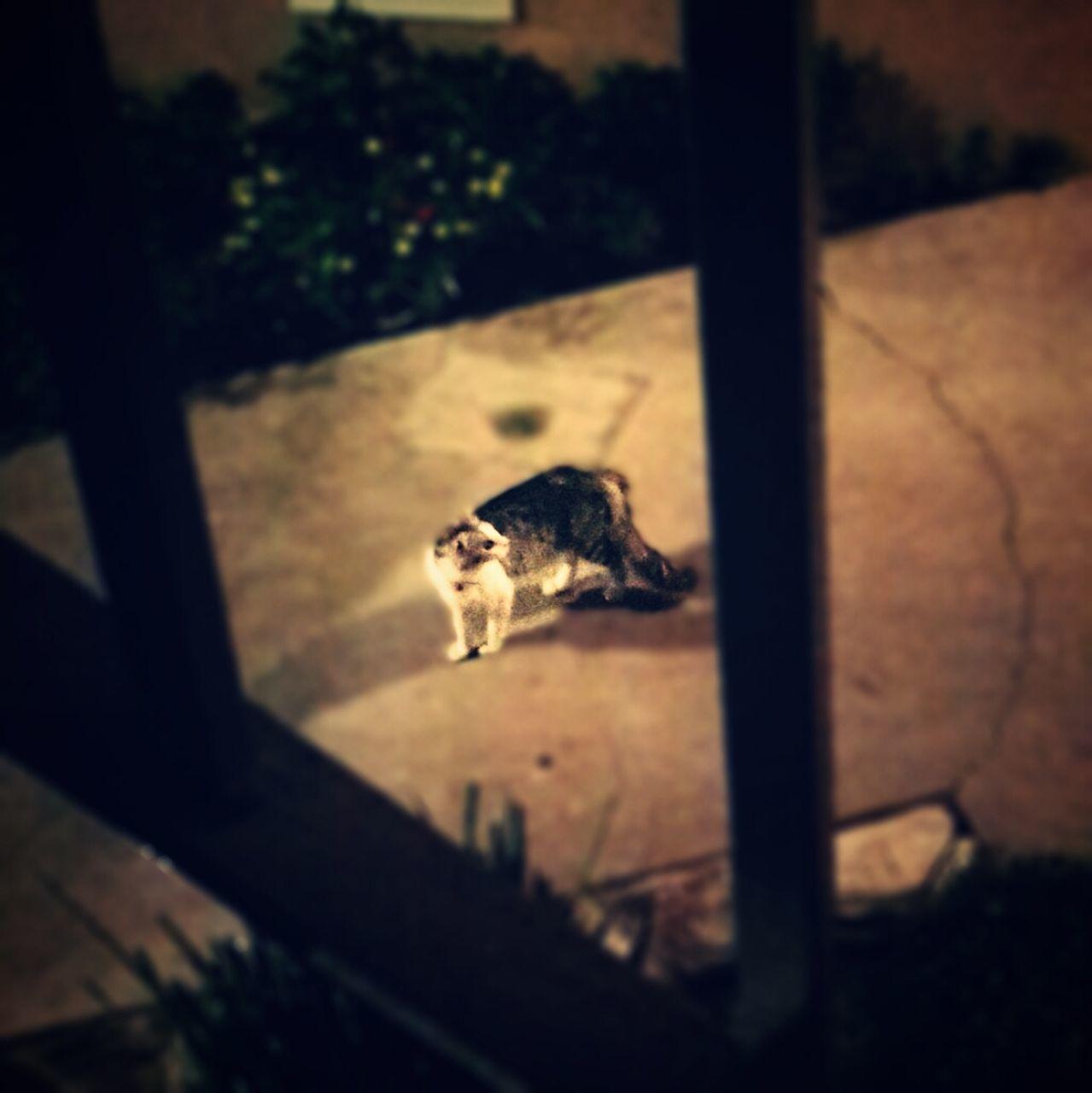 Cat Seen Through Railing