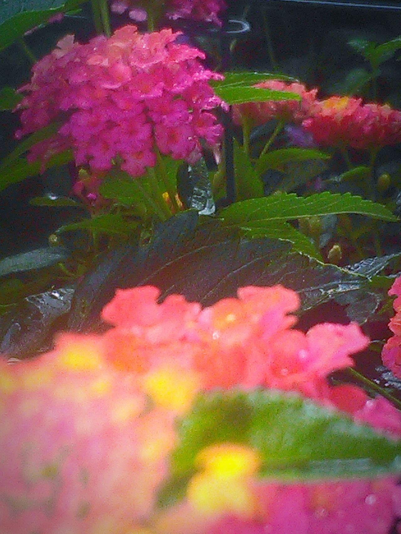 Leaves🌿 Rain Drops On Flowers Rain Drops On Leaves My Photography Flowers,Plants & Garden Rain Drops On Petals Rainy Days☔ Flower Porn Depth Of Field