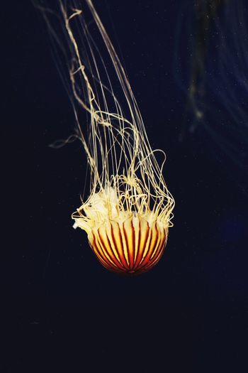 Photography Jellyfish Ocean Underwater Photography Lucasulmerphotography