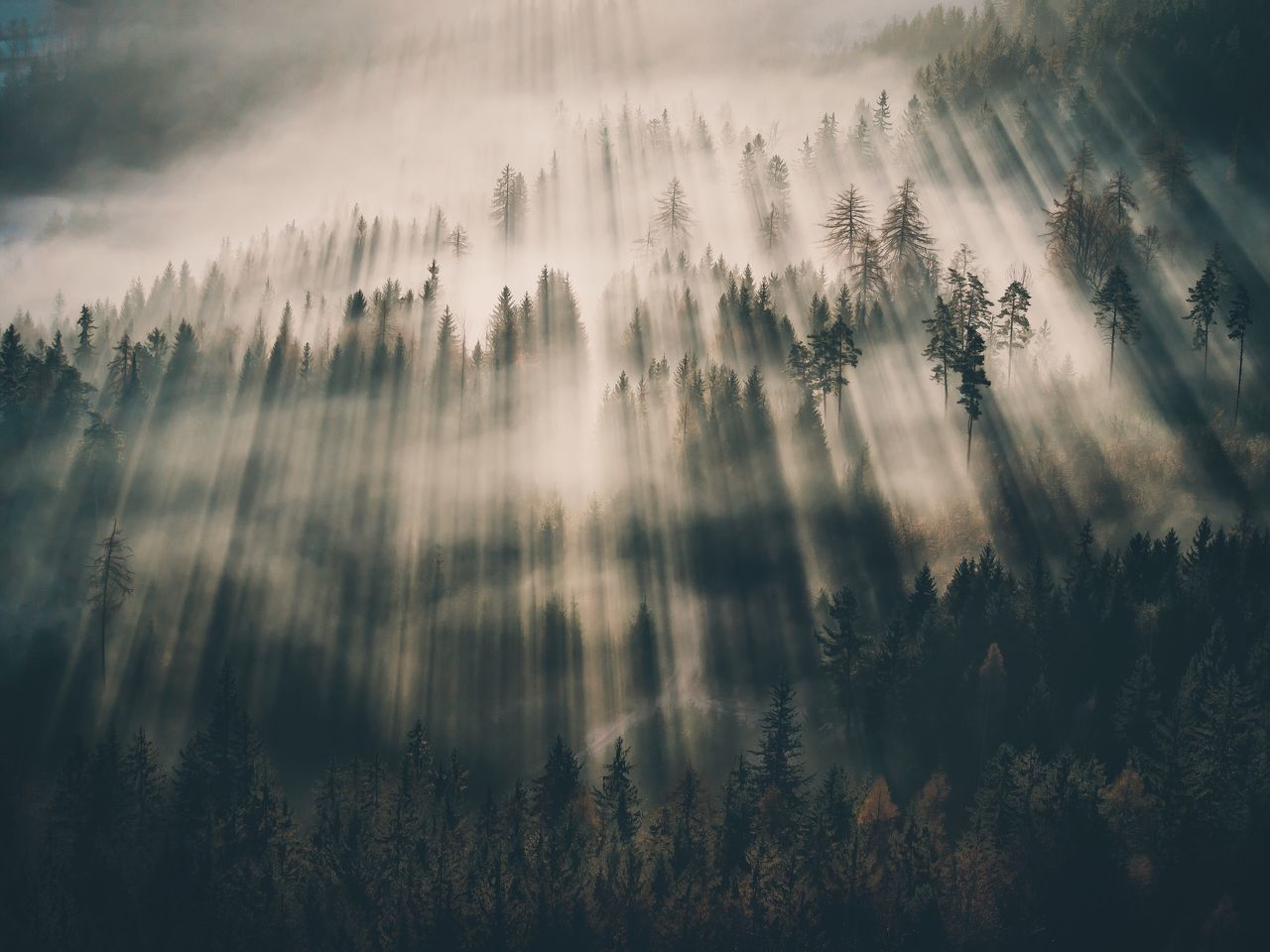 Nature Tranquility Beauty In Nature Scenics No People Tree Outdoors Idyllic Growth Forest Fog Tranquil Scene Day Water Sky Close-up