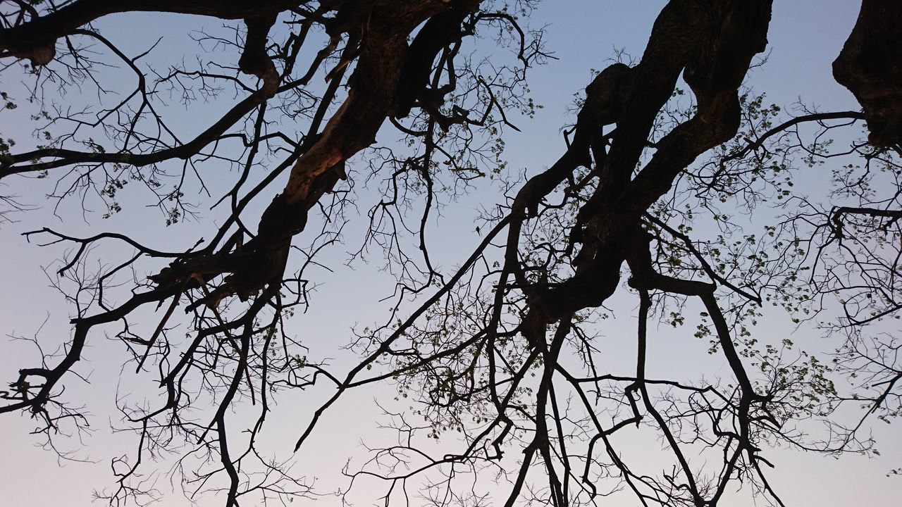 Bare Tree Beauty In Nature Branch Day Low Angle View Nature No People Outdoors Sky The City Light Tree