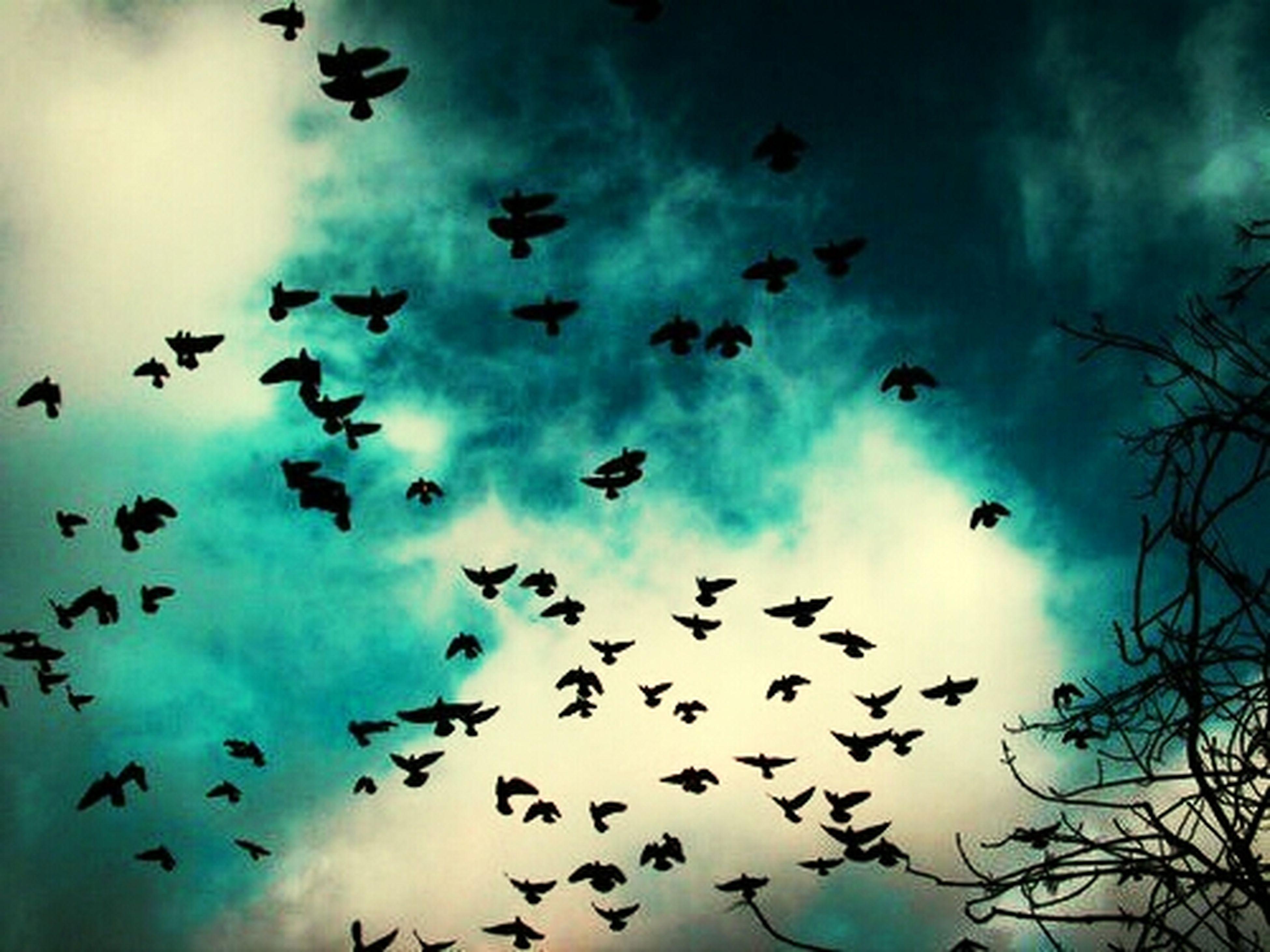 bird, flying, low angle view, animal themes, animals in the wild, flock of birds, wildlife, sky, cloud - sky, silhouette, cloudy, mid-air, nature, cloud, beauty in nature, spread wings, outdoors, day, blue