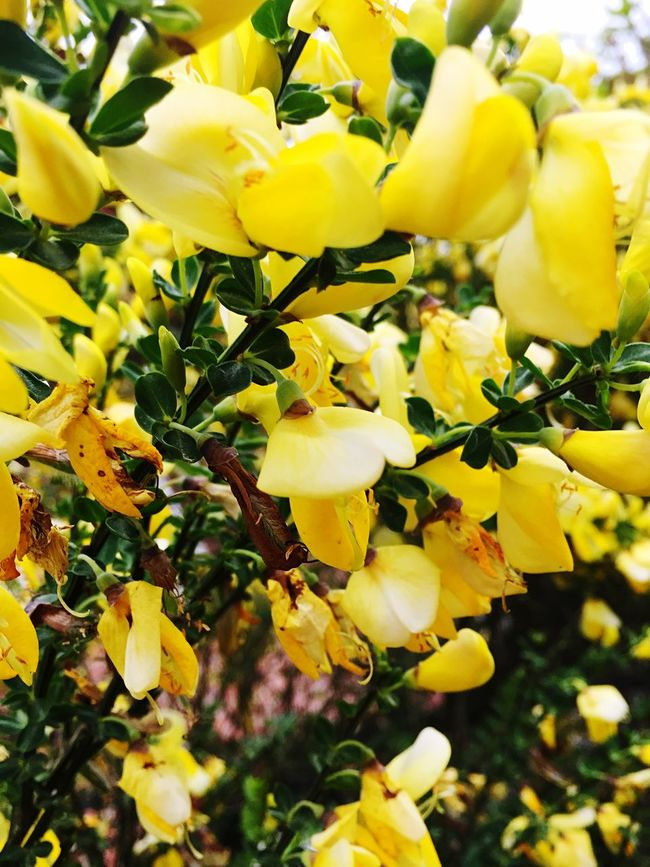 EyeEm Best Shots EyeEm Nature Lover Natur Flouers Nature