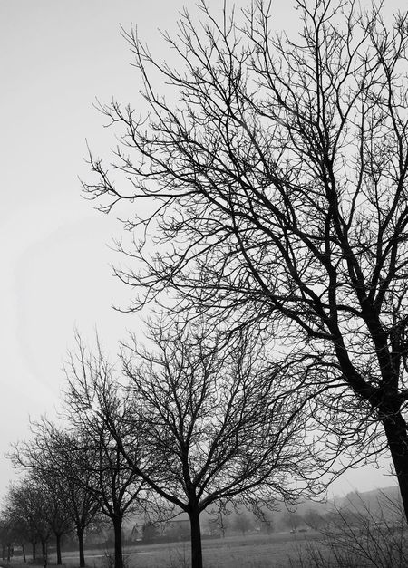 Tree Line Winter Blackandwhite Photography Bare Tree Branch Tree Low Angle View Nature Outdoors Tranquility Beauty In Nature Sky Clear Sky