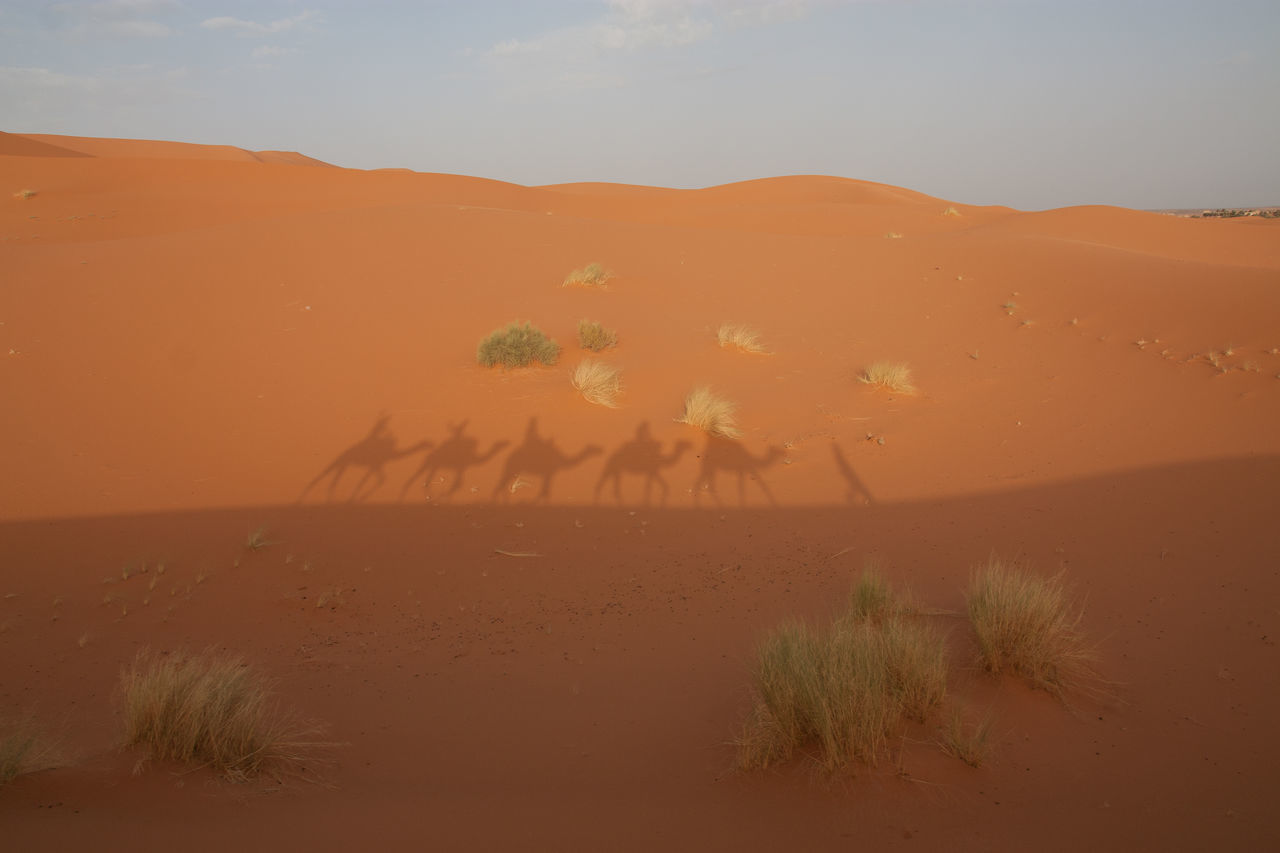 Beautiful stock photos of camel, Animal, Animal Themes, Arid Climate, Bush