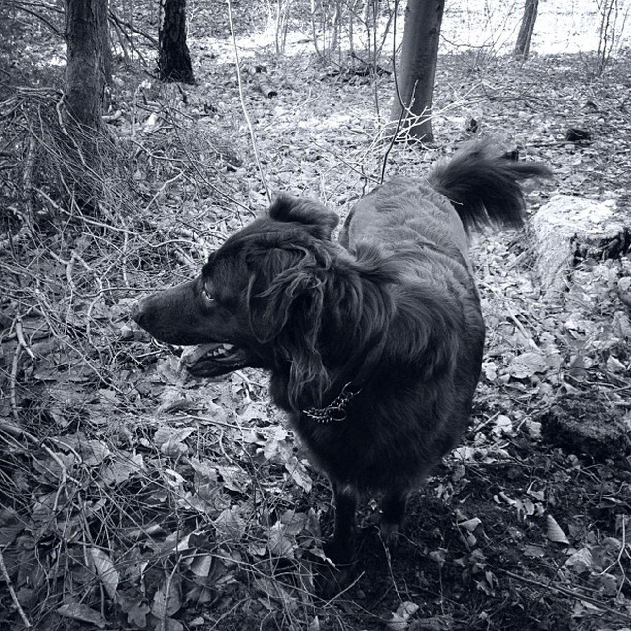 Vildbatting Buster Dog Forrest whatimdoingrightnow