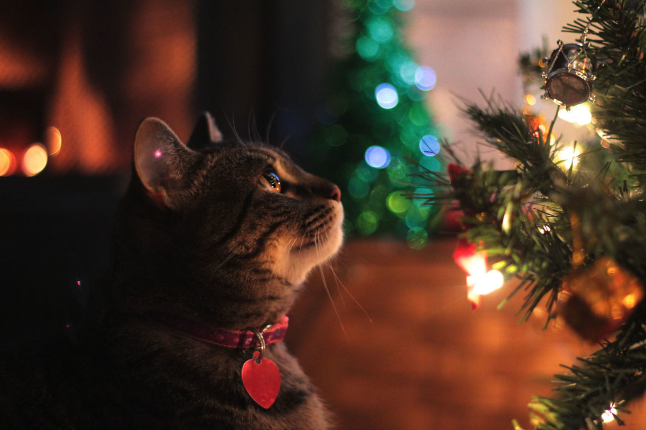 She is up to no good..... Christmas Tree Christmas Lights Cats Of EyeEm Christmas Ornament Indoors  Getting Inspired EyeEm EyeEm Best Shots Love Bokeh