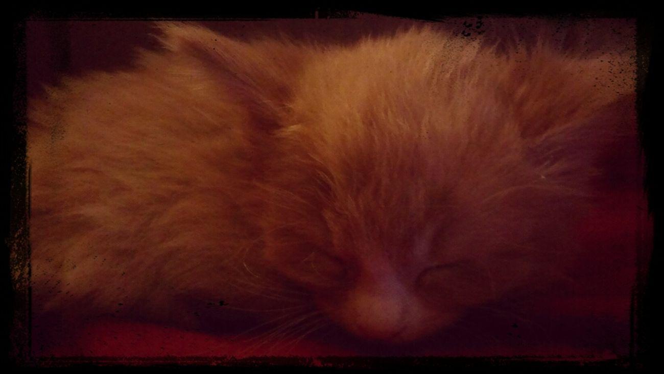 My Kitty Baby