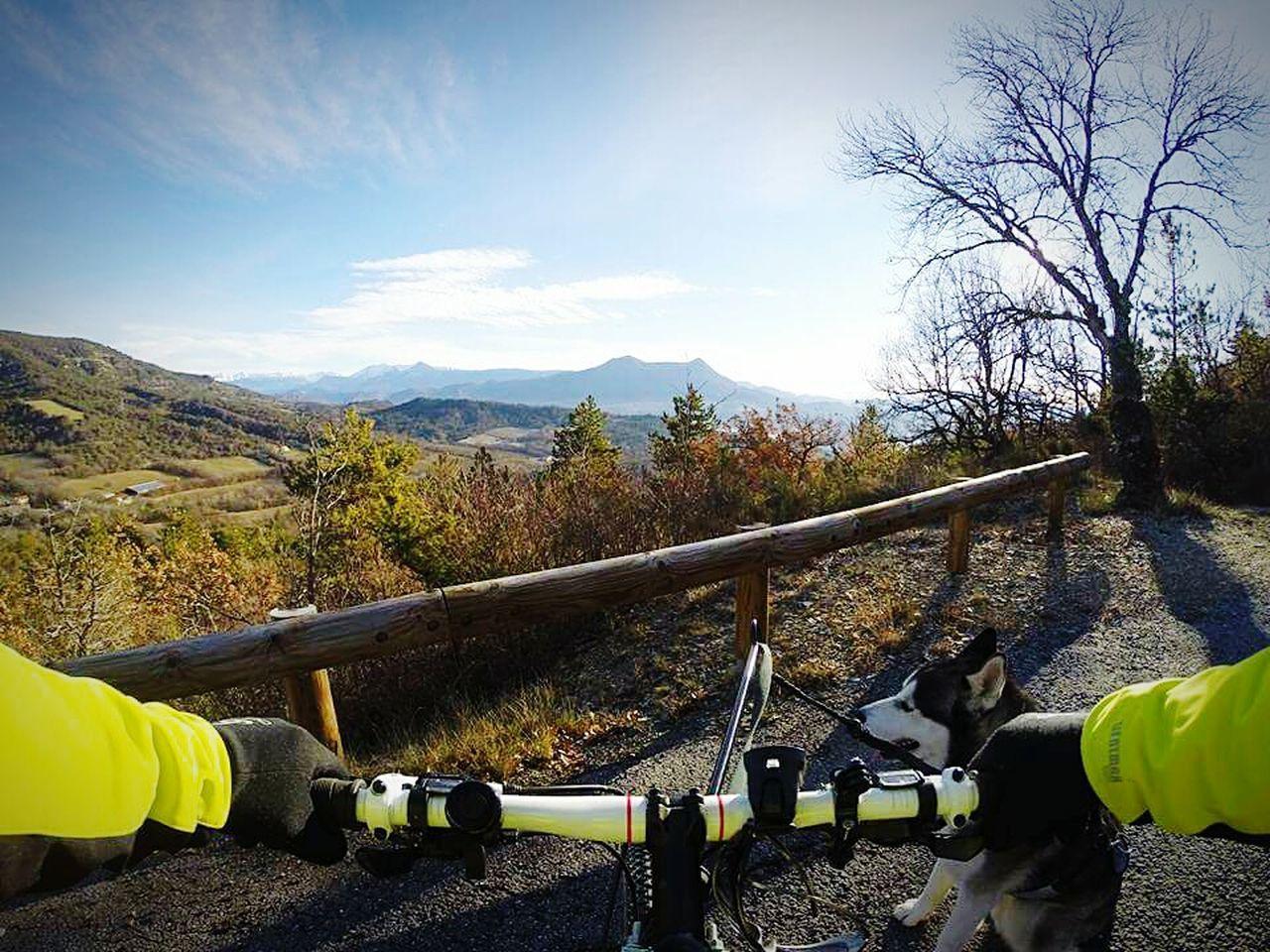 Sky Day Dog Husky Cousson Provence Alpes Cote D´Azur PACA Pacatourisme VTT Canivtt Mountain Eyeemvision Animal