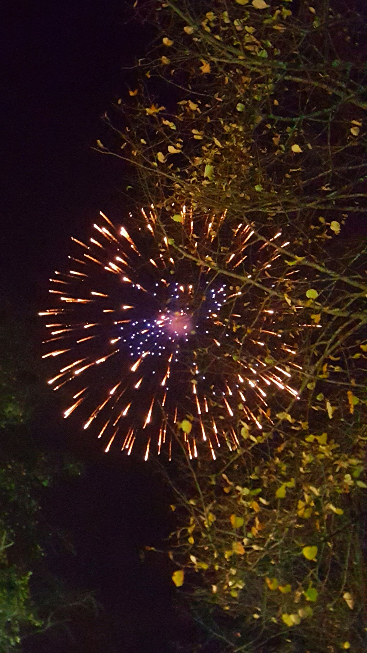 Firework Display Exploding Illuminated Outdoors Firework - Man Made Object Firework Celebration Billnewlandphotos Night Tree Event Sky Motion No People Cheshire Knutsford Tofts Cricket Club Plumley Lower Peover Cheshire Wildlife Bonfire Night Bonfire Bonfire🔥 Guy Fawkes Britain