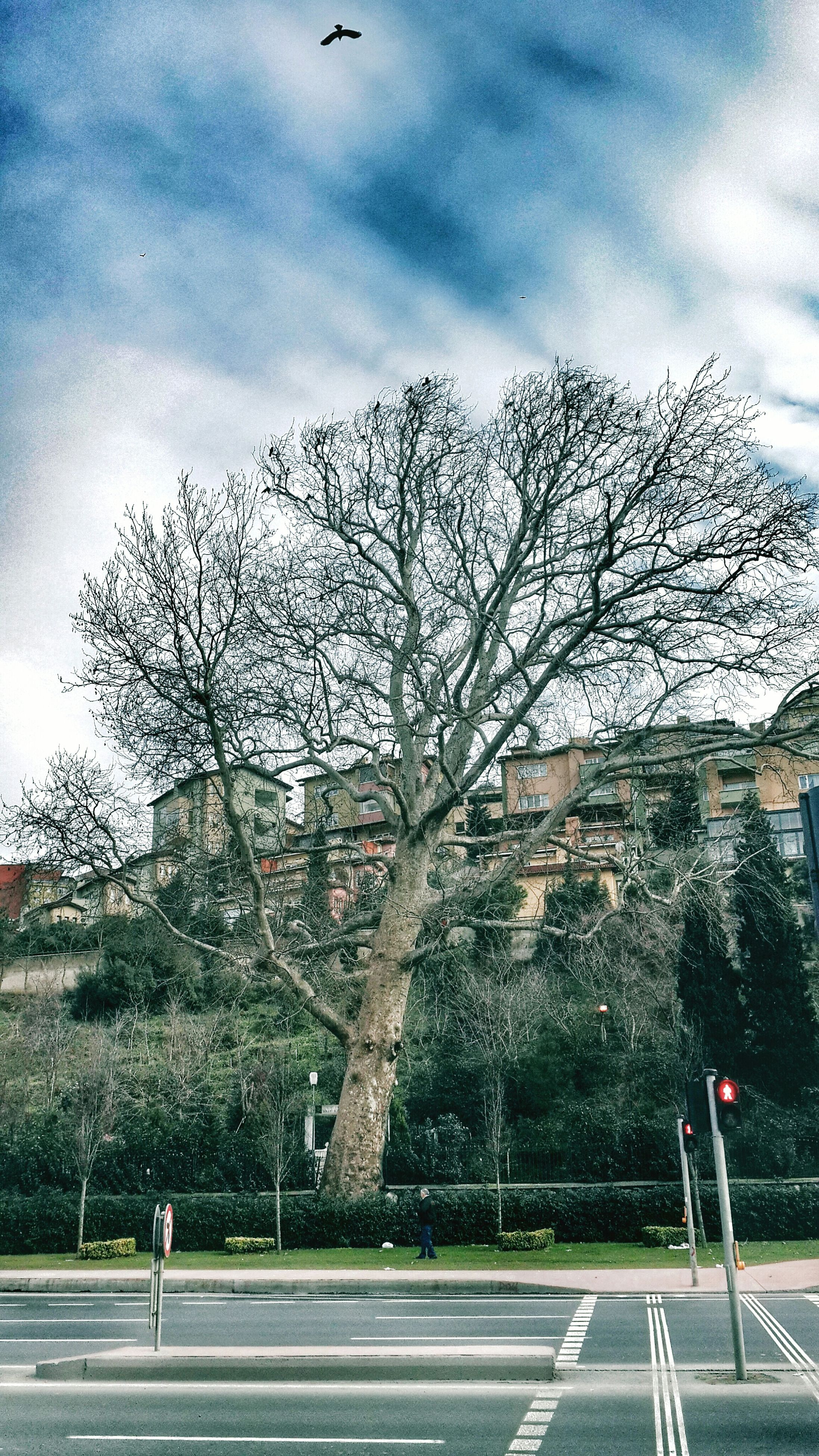 tree, sky, bare tree, building exterior, built structure, architecture, cloud - sky, cloudy, cloud, branch, road, day, weather, nature, outdoors, transportation, street light, street, house, incidental people