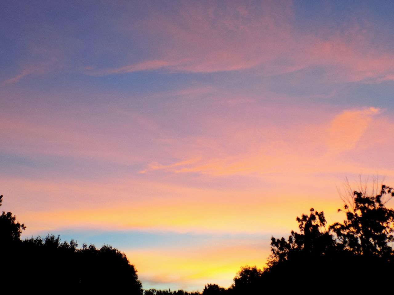 sunset, tree, silhouette, scenics, beauty in nature, nature, sky, tranquility, tranquil scene, no people, cloud - sky, outdoors, growth, day