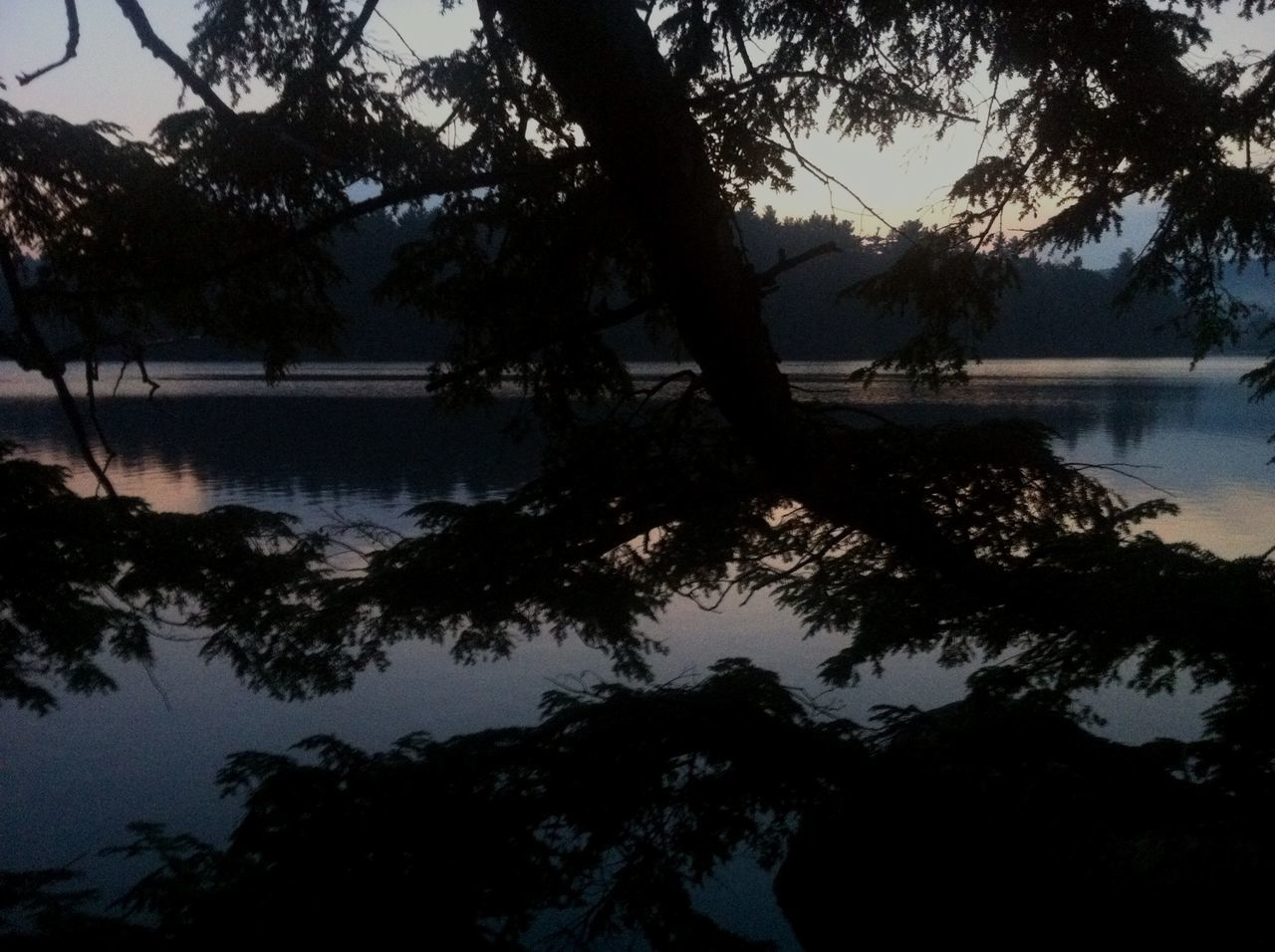 tree, water, lake, beauty in nature, nature, silhouette, scenics, reflection, tranquil scene, tranquility, outdoors, no people, branch, tree trunk, growth, sky, day