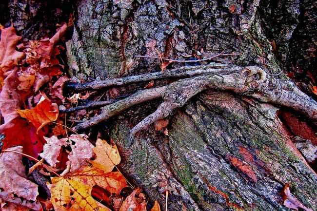 Happy Halloween hand coming out of base of tree. Imagination October Seeing Things Tree Roots  Fall Leaves
