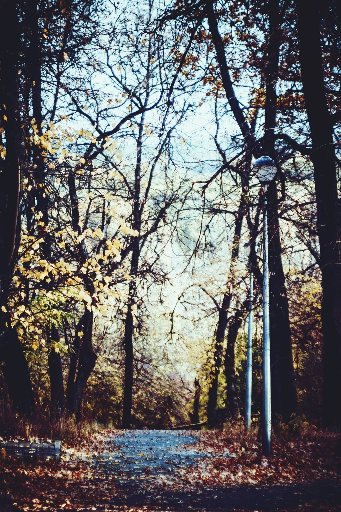 Сегодня очень хороший день выдался) Park Autumn Russia Lipetsk