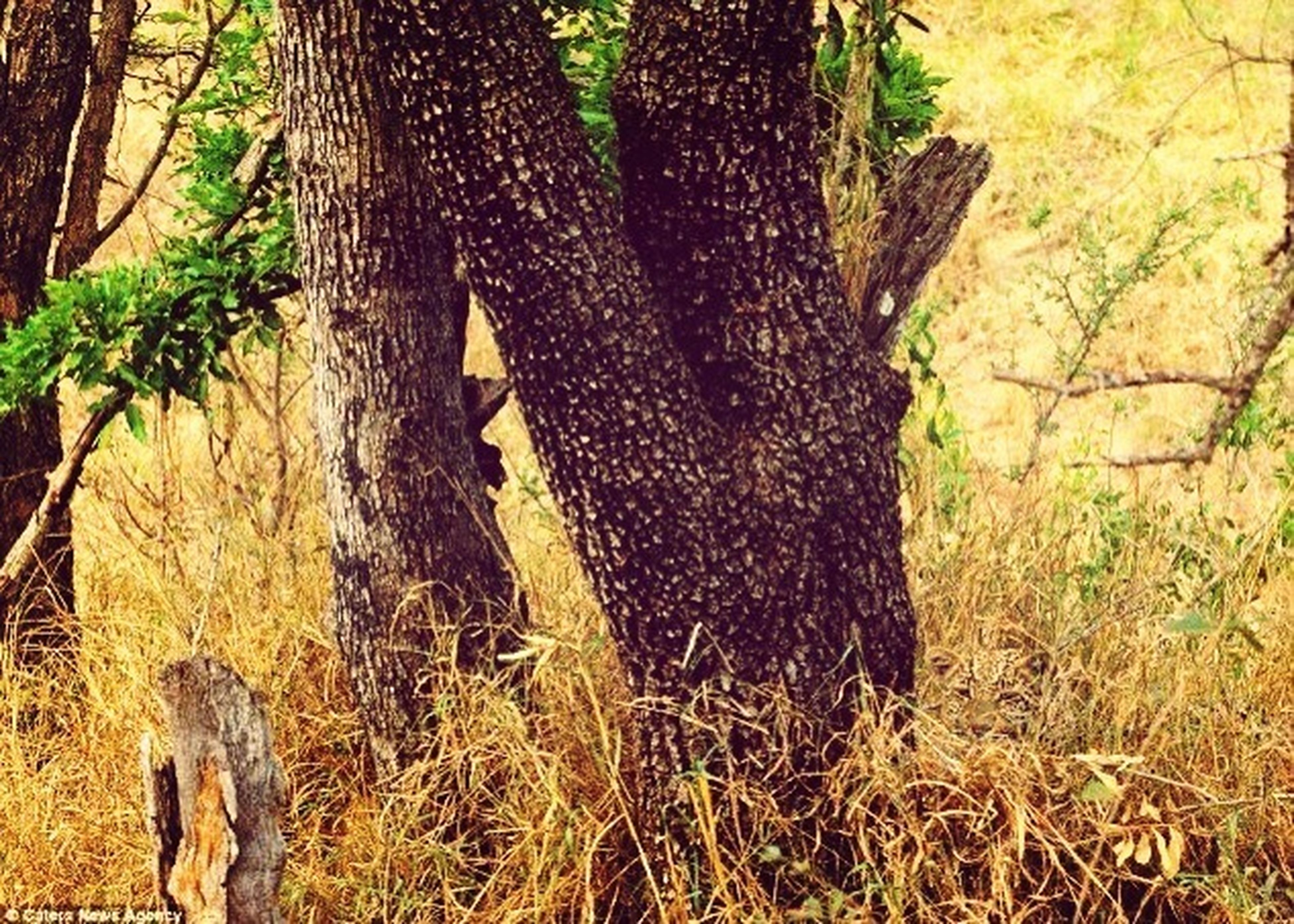 Where's The Leopard?