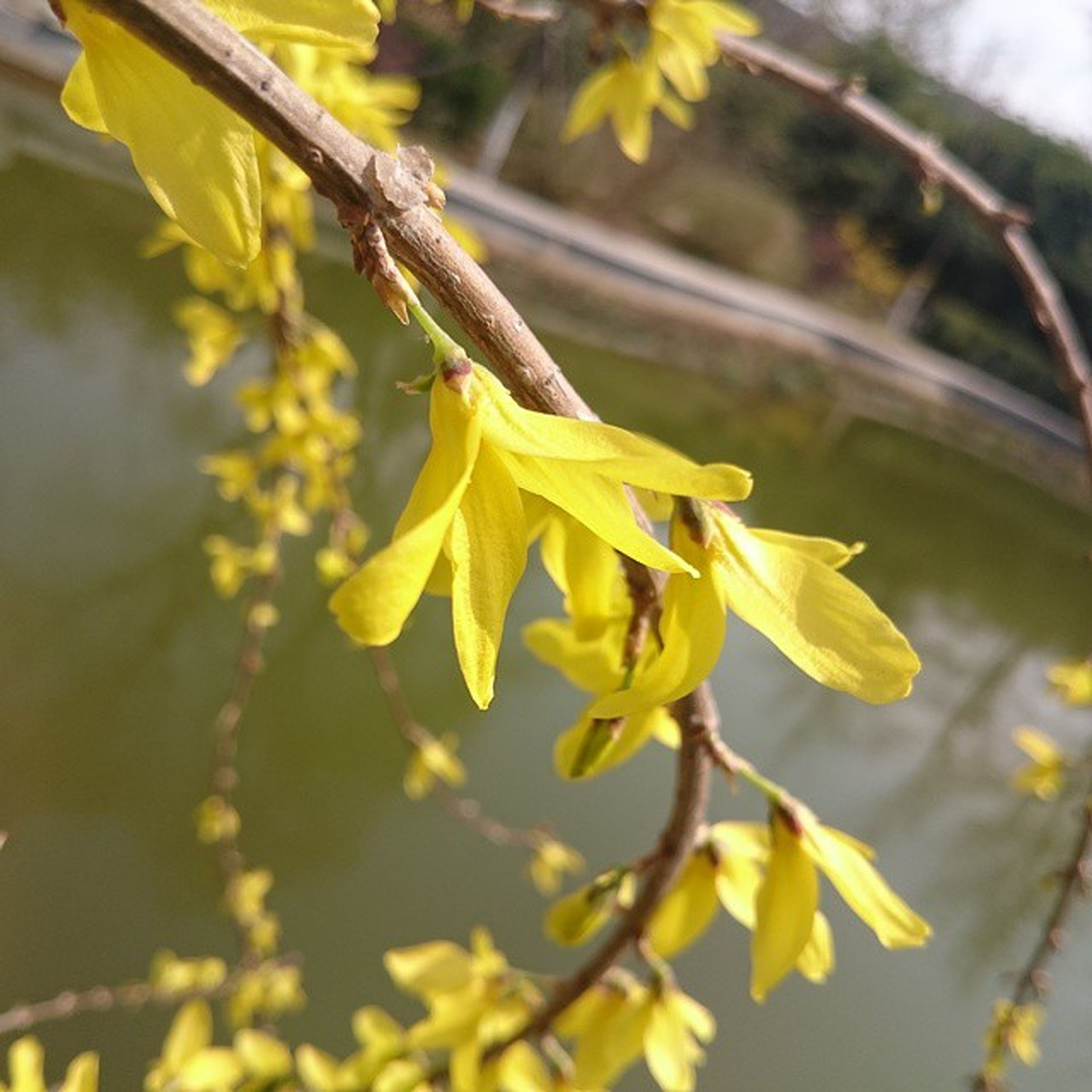 yellow, flower, growth, focus on foreground, freshness, close-up, nature, beauty in nature, fragility, petal, branch, plant, leaf, selective focus, tree, day, outdoors, stem, twig, no people
