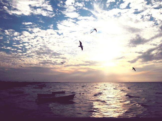 Sunset at the sea Birds Birds Silhouette Birds Flying Birds Flying At Sunset Seagulls And Sea Flying Bird Seagulls In Flight Boats Boat Sillouette Sunset Silhouettes Ocean View Clouds And Sky Cloudy Sunset Yucatan Mexico Mexico Ocean Ocean Sunset  Ocean And Sky