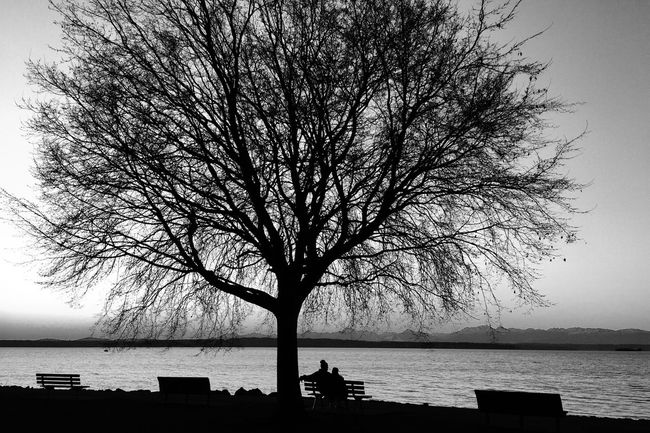 Happy New Year Golden Gardens Park Seattle Sunset Silhouettes