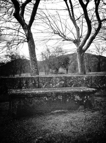 Blackandwhite Landscape Trees AMPt_community