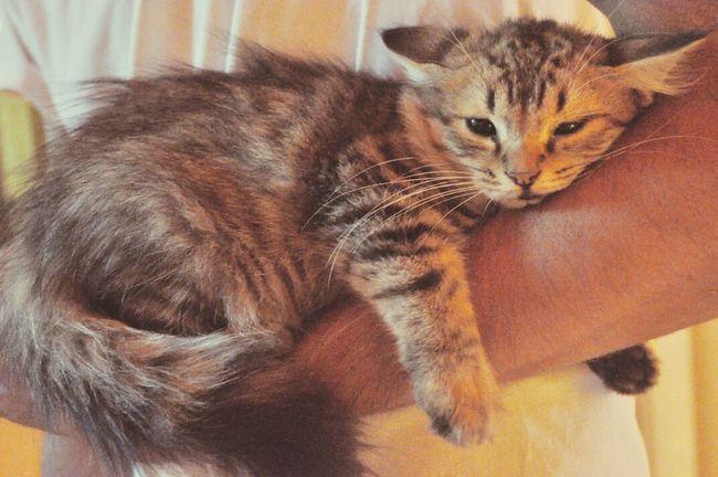 ;-; Kitty Afraid Whywontulovemedammit!