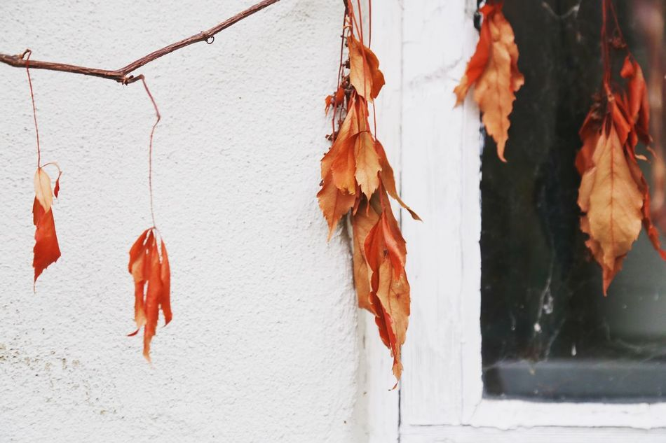 The Secret Spaces Leaf Hanging Change Autumn Close-up Outdoors Day No People Nature