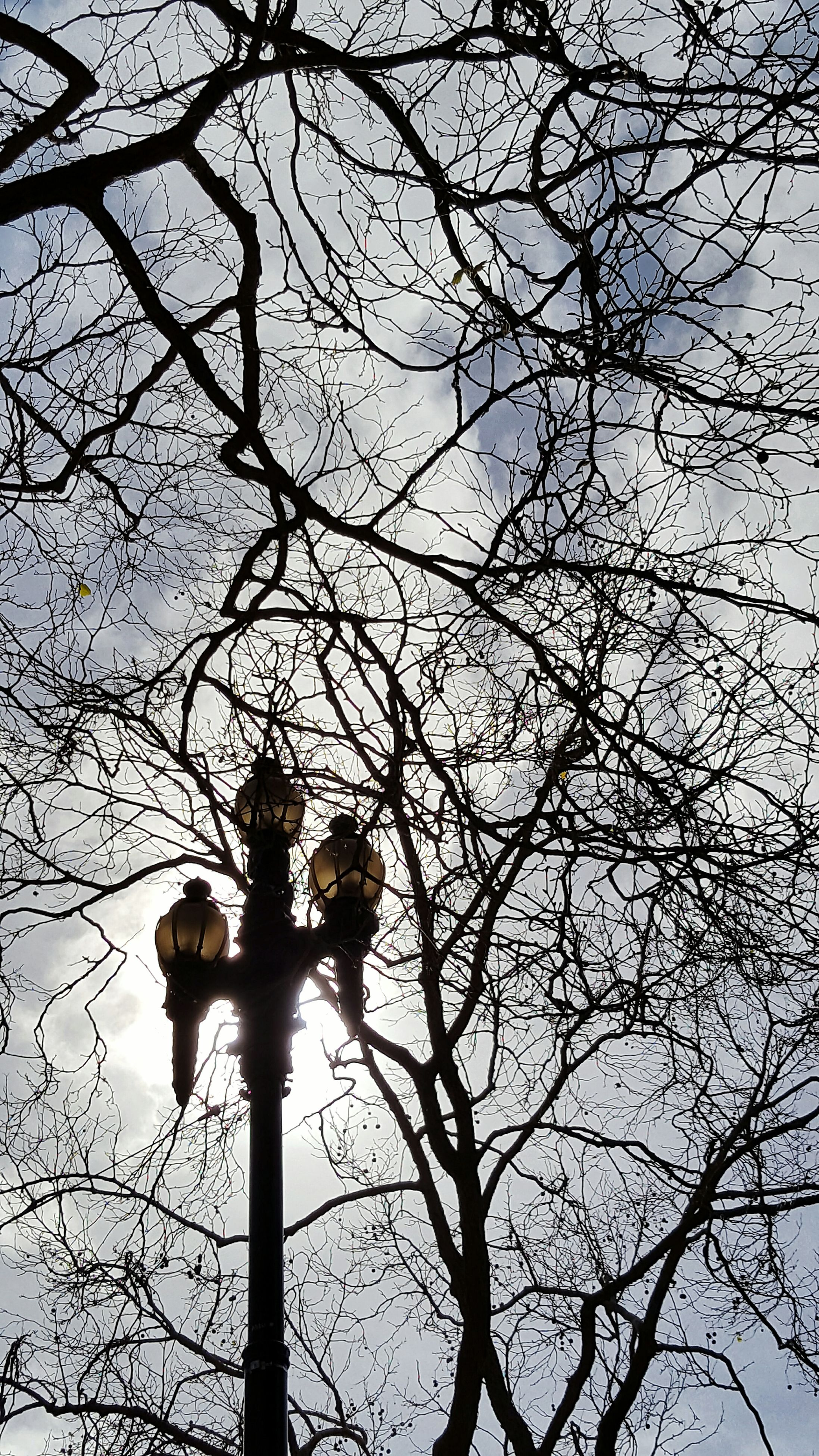 tree, bare tree, branch, low angle view, animal themes, nature, animals in the wild, togetherness, sky, no people, outdoors, day, animal wildlife, perching, beauty in nature, mammal, bird