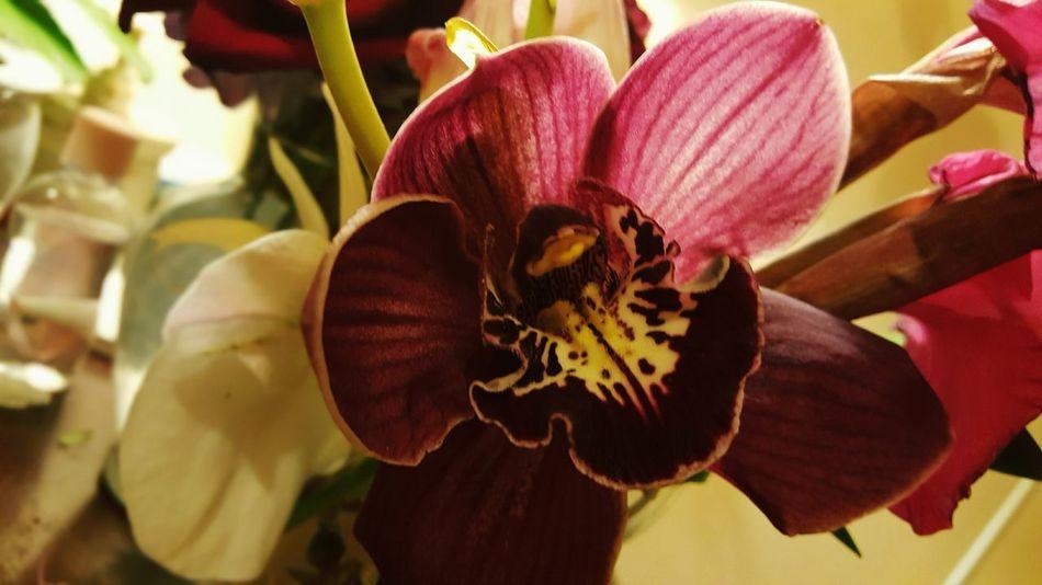 Orchid Flowers Purple Still Life Flower Flowers,Plants & Garden Orchids