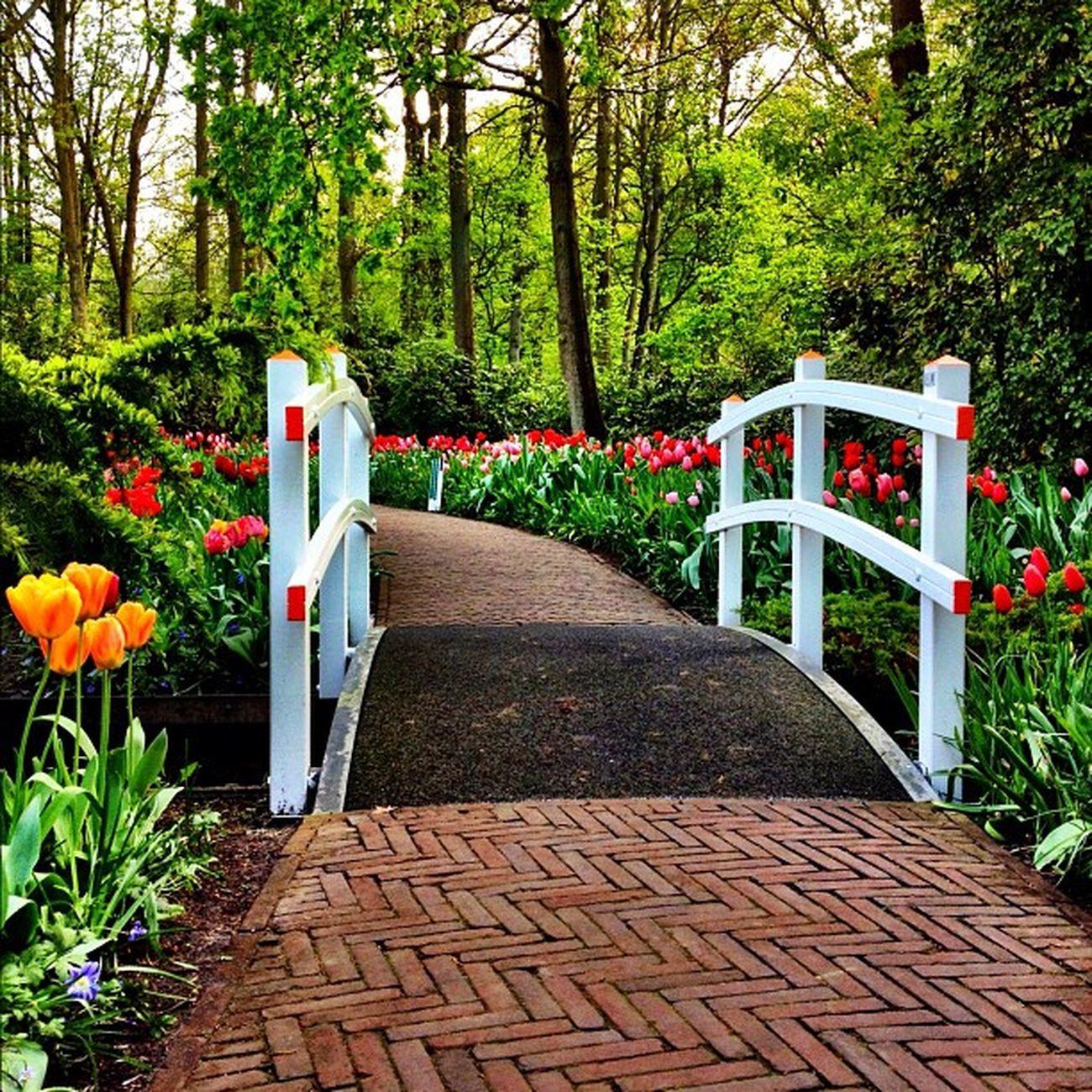 Bridge #tulipfieldsexperience #holland #igersholland #dutch #jj_forum #flower #keukenhof #ubiquography #tulip #jj Tulipfieldsexperience Flower Holland Tulip Dutch Jj  Keukenhof Jj_forum Ubiquography Igersholland Theflowerofgardens
