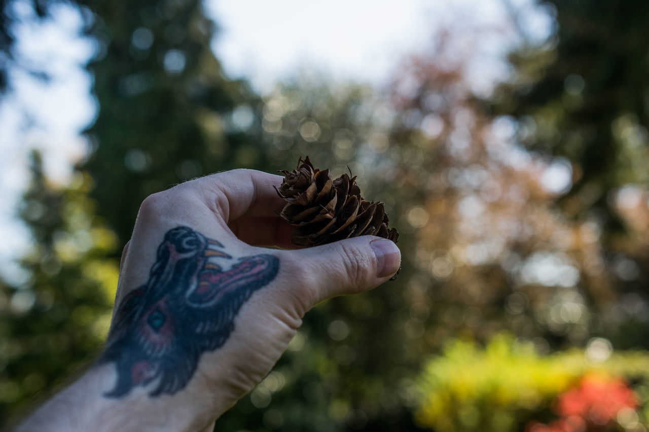 human hand, focus on foreground, human body part, one person, tree, real people, day, outdoors, flower, close-up, nature, people
