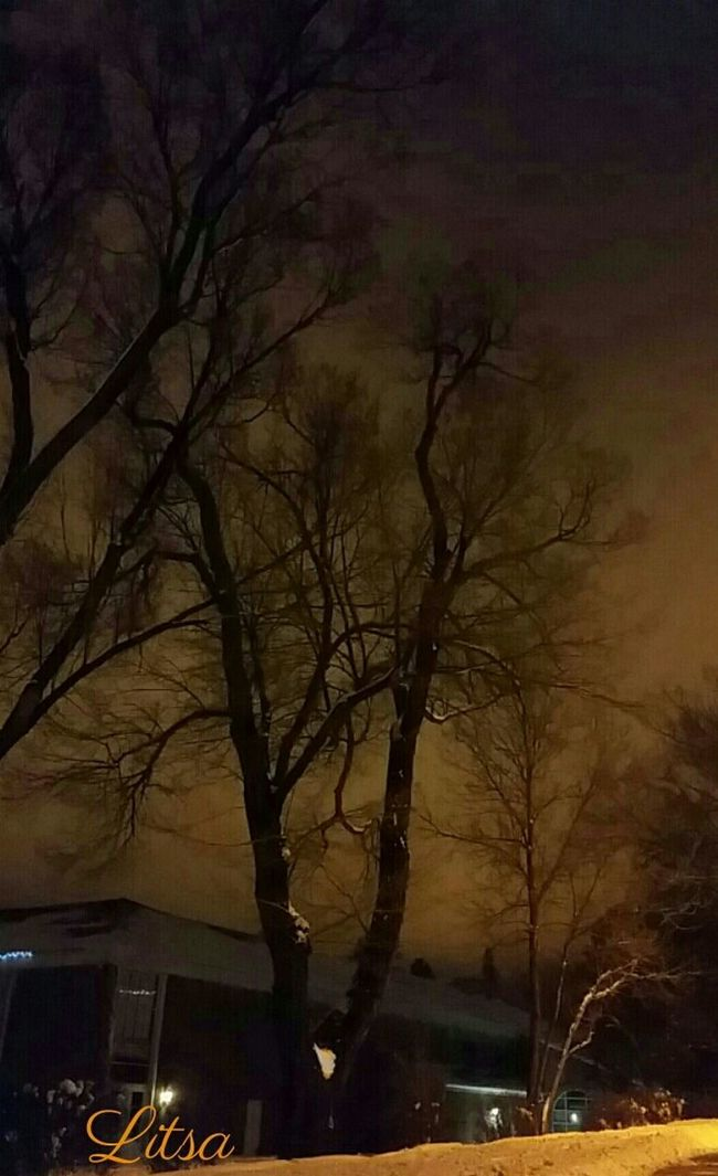Winter Trees Night Photography The Purist (no Edit, No Filter) Not A Soul Around... Peaceful
