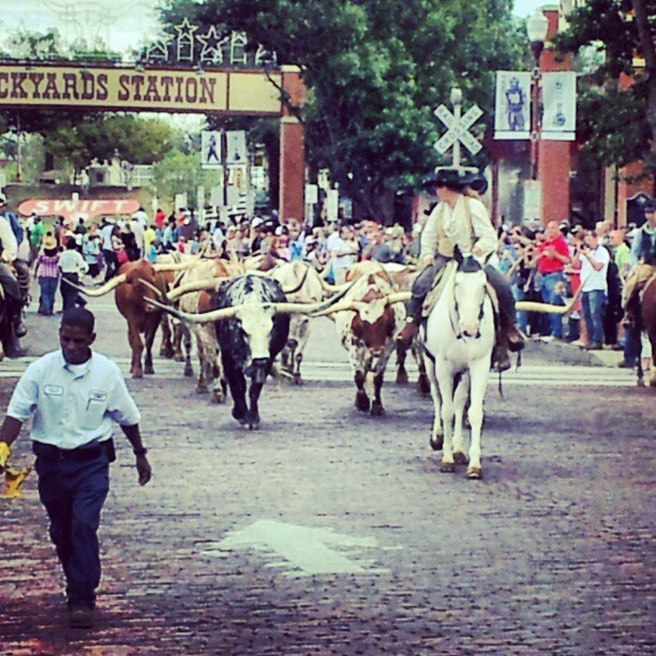 Got to see the Cattlerun at the Stockyards in Ftworth TX