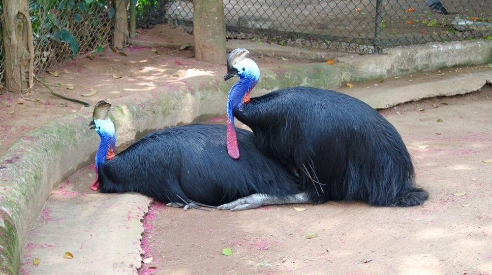 Animal Animal Head  Animal Themes Animal's Cou Animal's Love Big Birds Birds Close-up Couple Days Ago Emu Minor Nature No People Outdoors Relaxation Sri Lanka Zoo