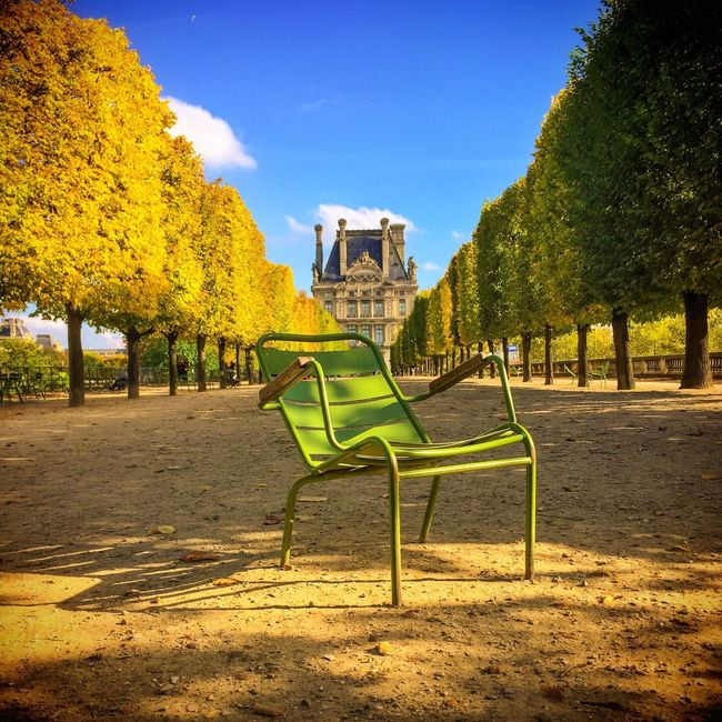 Good Evening Paris! Bonne Soirée! Tree Paris ❤ Paris Parisweloveyou EyeEm Best Shots Autumn Leaves Autumn Louvre