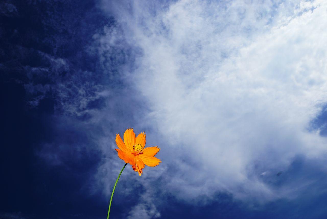 Beautiful stock photos of orange, Beauty In Nature, Blue, Close-Up, Cloud