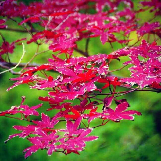 Nature Fortworth Red Leaves Green Throwbackphoto Awesome Imisstakingphotos Life Art