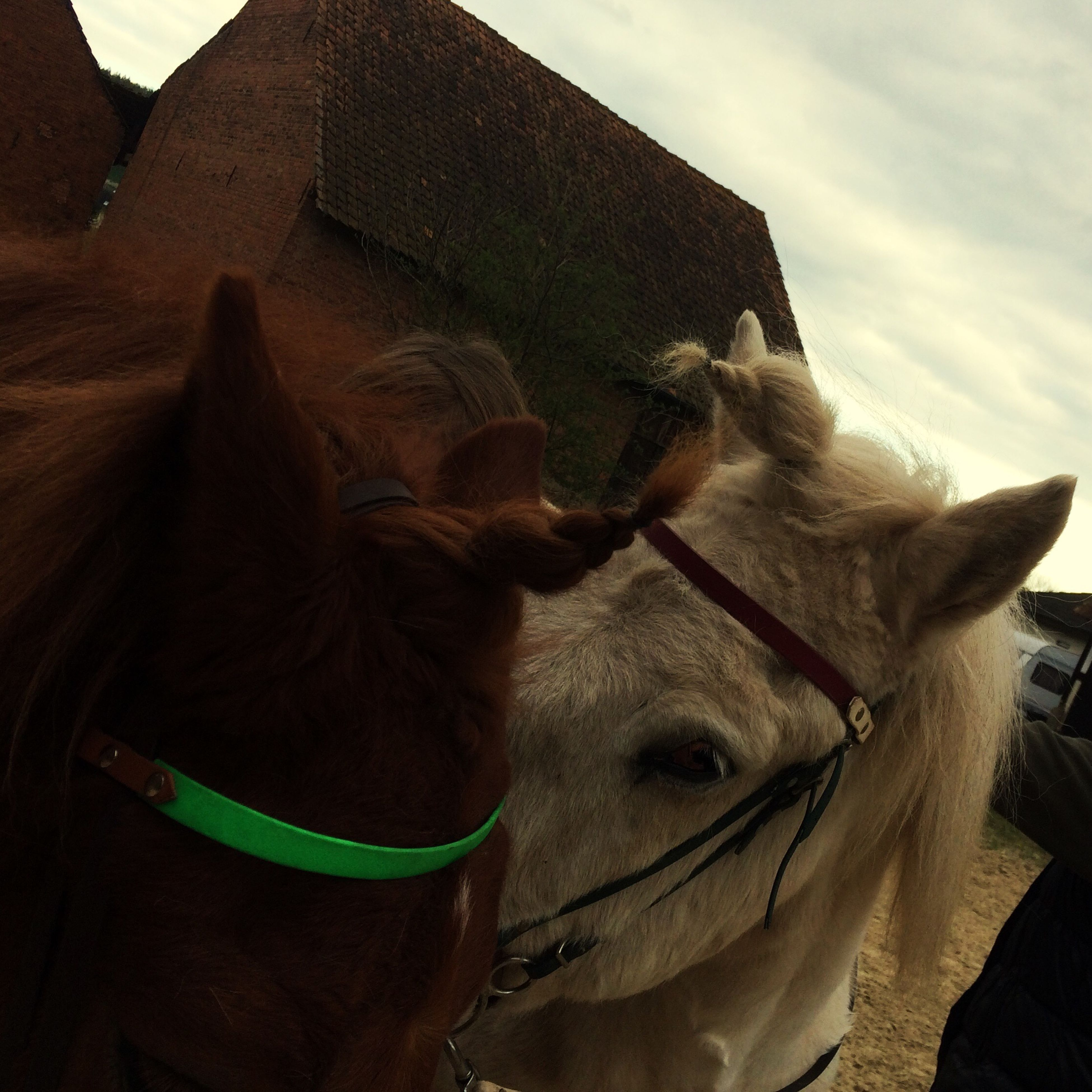 domestic animals, horse, mammal, animal themes, livestock, sky, one animal, working animal, outdoors, bridle, day, close-up, no people, nature