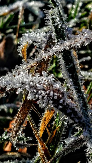 Winter of Ice Frozen Nature Frozen World Winter Macro Photography World Of Ice Kreativität Close-up Nature No People Focus On Foreground Spider Web Outdoors Plant Beauty In Nature