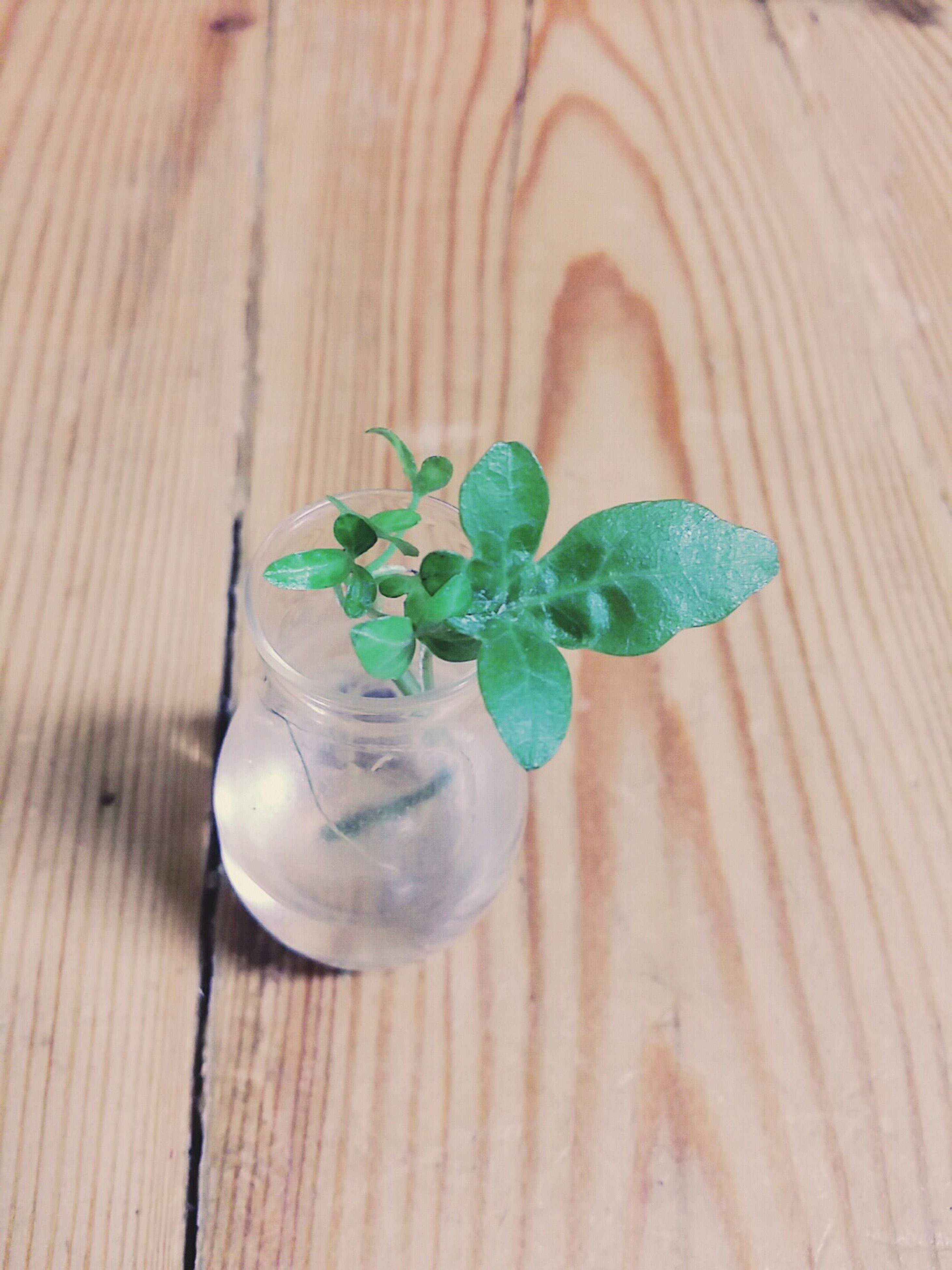 freshness, leaf, close-up, table, green color, growth, fragility, flower, plant, high angle view, wood - material, nature, focus on foreground, beauty in nature, indoors, food and drink, no people, stem, day, water