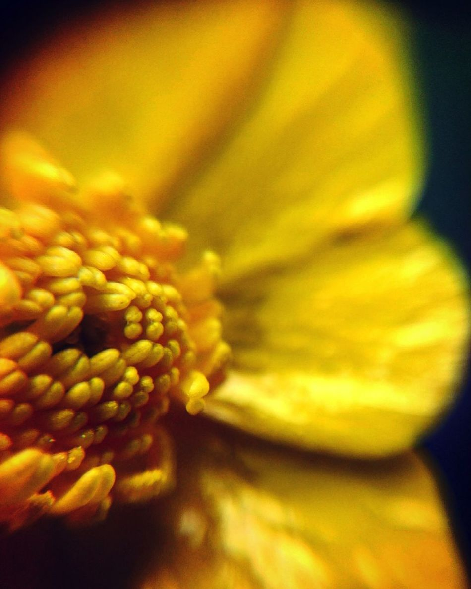 Flower Yellow Flower Beauty In Nature Naturebeauty Photographer Something Beautiful Outdoors Photography Naturelovers Beautiful Nature Nature Photography Finnish Nature Summer Memories 🌄 Colorful Weather