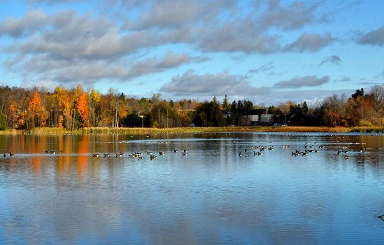 Ahh... that's more like it. Beautiful Outdoors Fall Cool Lovecycling Mytherapist LovinLife Eloracataracttrail Water Reflections Fallcolours Fatbike Fatbikes Canadageese Sunny Nature Naturephotography Naturallight Getoutandexplore Nikonphotographers Prophotographer Rrhurstphotography Artsburlington Latowphotographersguild