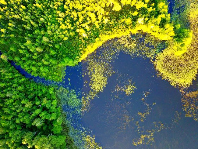 Morning green Nature Beauty In Nature No People Green Color Growth Day High Angle View Yellow Outdoors Full Frame Tree Backgrounds Tranquility Plant Scenics Blue Close-up Sky Freshness