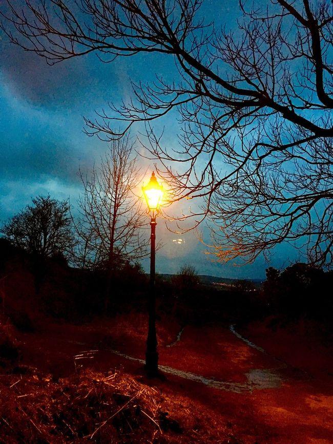 Orange glow of a street lamp, Ilkley Tarn, Ilkley Moor, Yorkshire Tree Sunset Beauty In Nature Bare Tree Sky Tranquility Nature Tranquil Scene No People Sun Outdoors Branch Scenics Tree Trunk Silhouette Landscape Day (null)Yorkshire Ilkley Moor Cloud - Sky Ilkley Tarn