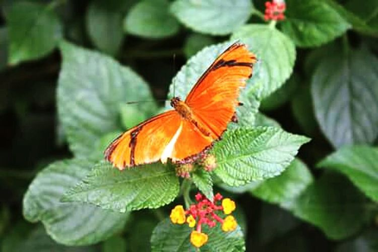 Colores de primavera. Nature Insects  Butterfly Nature_collection