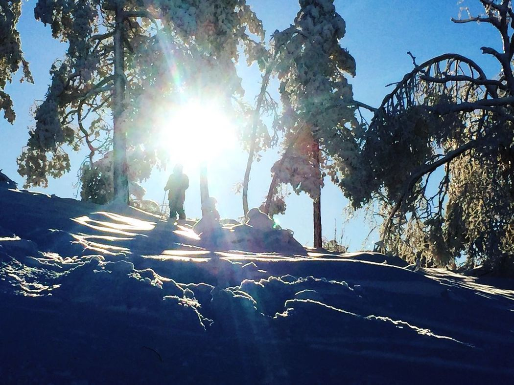 Skiing❄️ Sunlight Tree Sunbeam Lens Flare Sun Full Length Day Shadow Outdoors Nature Road Two People Men Standing Growth Real People Togetherness Winter Only Men Beauty In Nature EyeEm Nature Lover EyEmNewHere Lifestyles Beauty In Nature Landscape