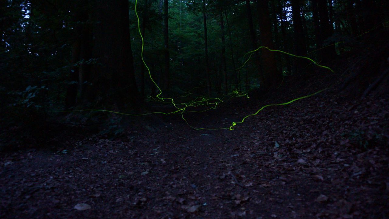 Forest Night WoodLand No People Outdoors Tree Nature Illuminated Tree Trunk Freshness Black Background Flying Fireflies Fireflies At Night Fireflies In The Night  Fireflies Nature Tree
