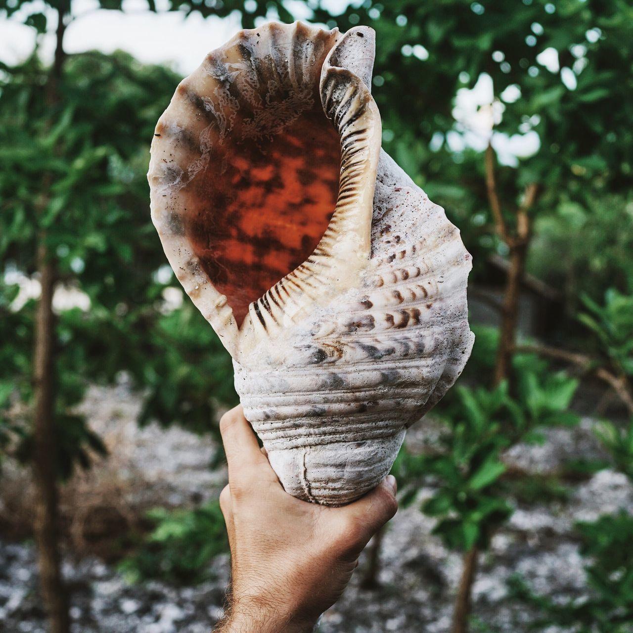 Close-Up Of Hand Holding Seashell