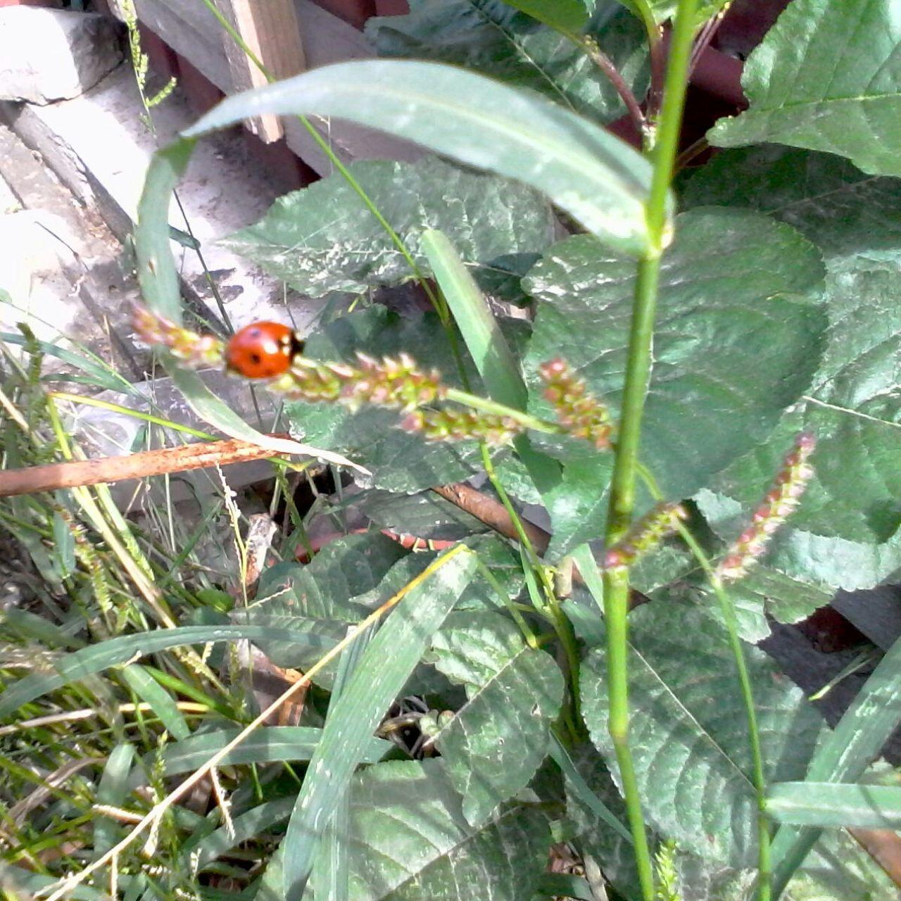 Green Plants Ladybeetle Ladybug Grass Leafs Wolfzuachis Eyeem Market