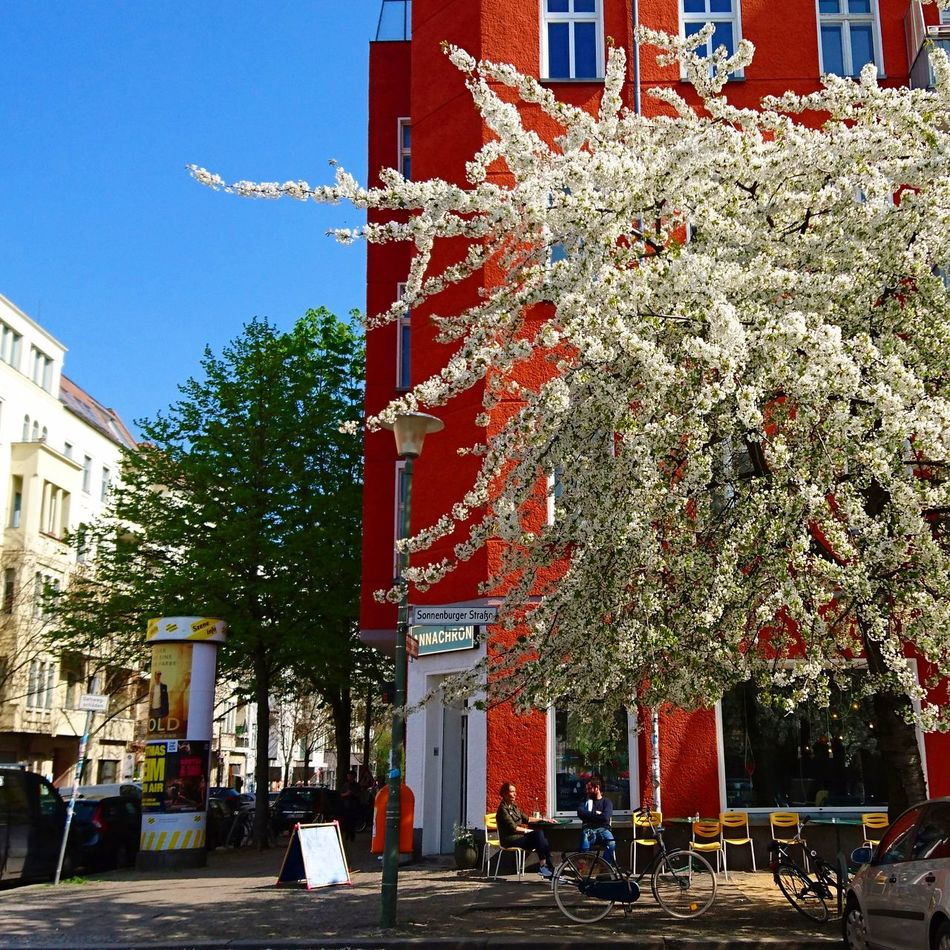 Outdoors Day Architecture Red Tree Building Exterior Sky Springtime Spring Flowers Spring Blossoms Red Building City Berlin Photography Berlin Flowers Nature City Life